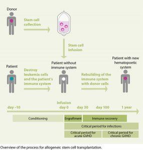 allogeneic_stem_cell_transplantation_570px_003.ashx